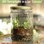 DIY Terrariums in a Jar Tutorial - Don&#039;t Mess with Mama.com