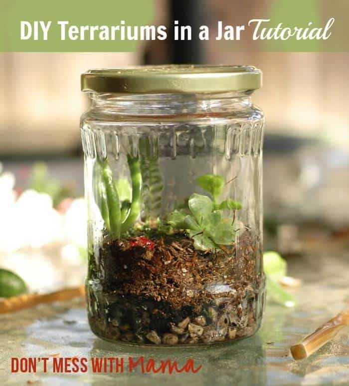 DIY Terrariums in a Jar Tutorial Pin - Don't Mess with Mama.com