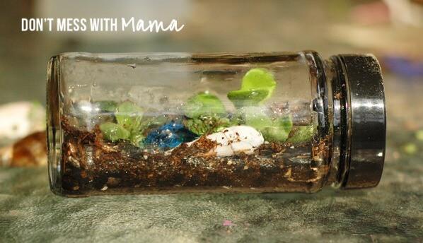 Finished Terrarium in a Jar - Don't Mess with Mama