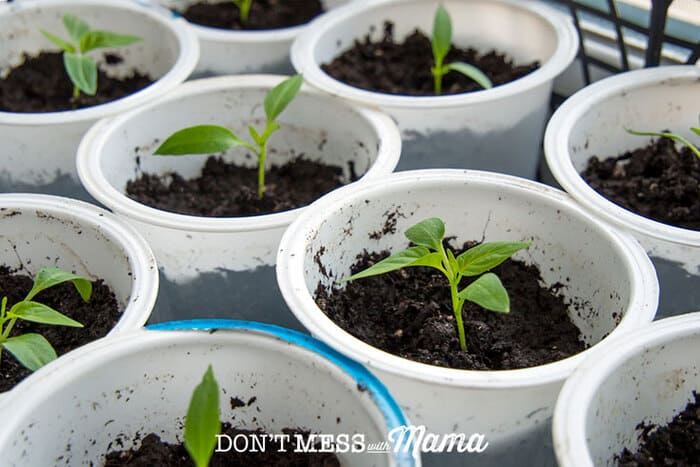 10 Ways to Reuse and Recycle K-Cups - Don't Mess with Mama