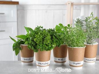 35 Foods You Can Grow Indoors