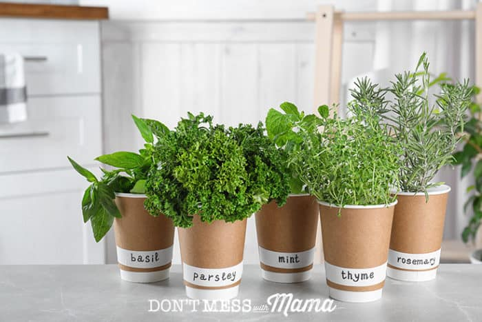 How to Grow Food Indoors - Step-by-Step Guide - Don't Mess with Mama