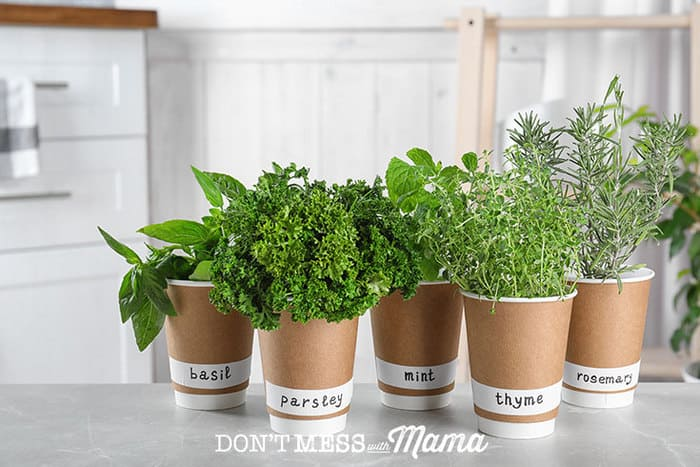herbs in pots in a kitchen
